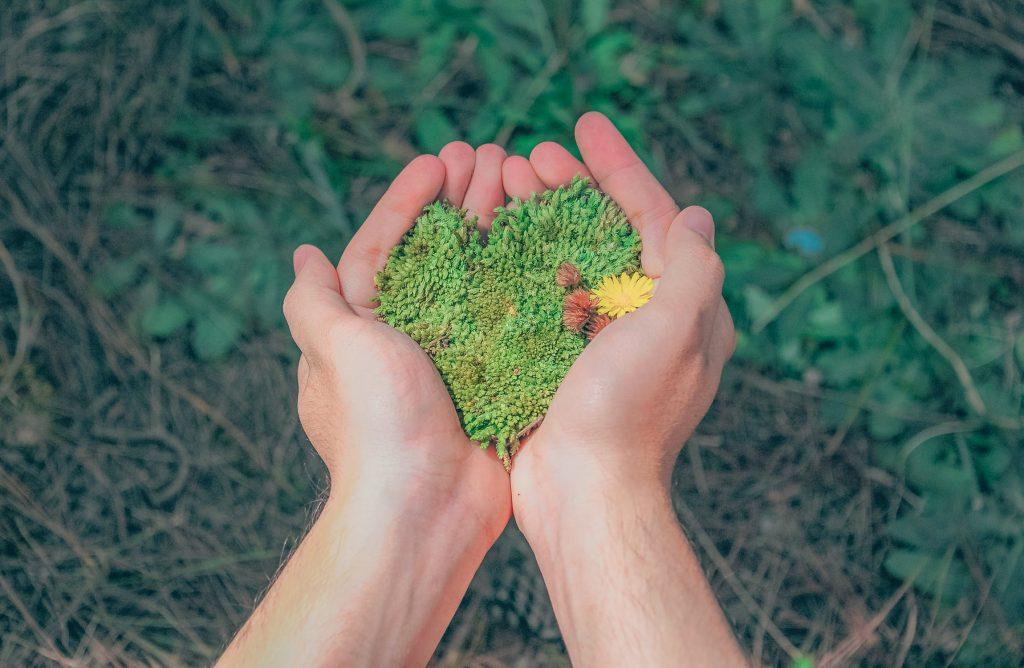 sustentabilidade, preservação do meio ambiente, baixo impacto ambiental