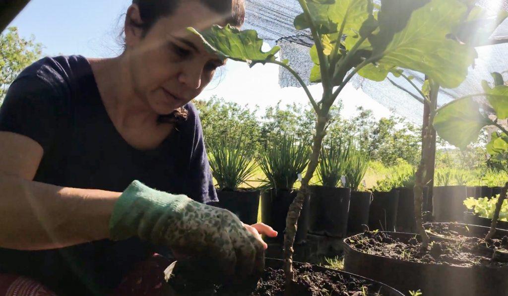 como cultivar horta em casa